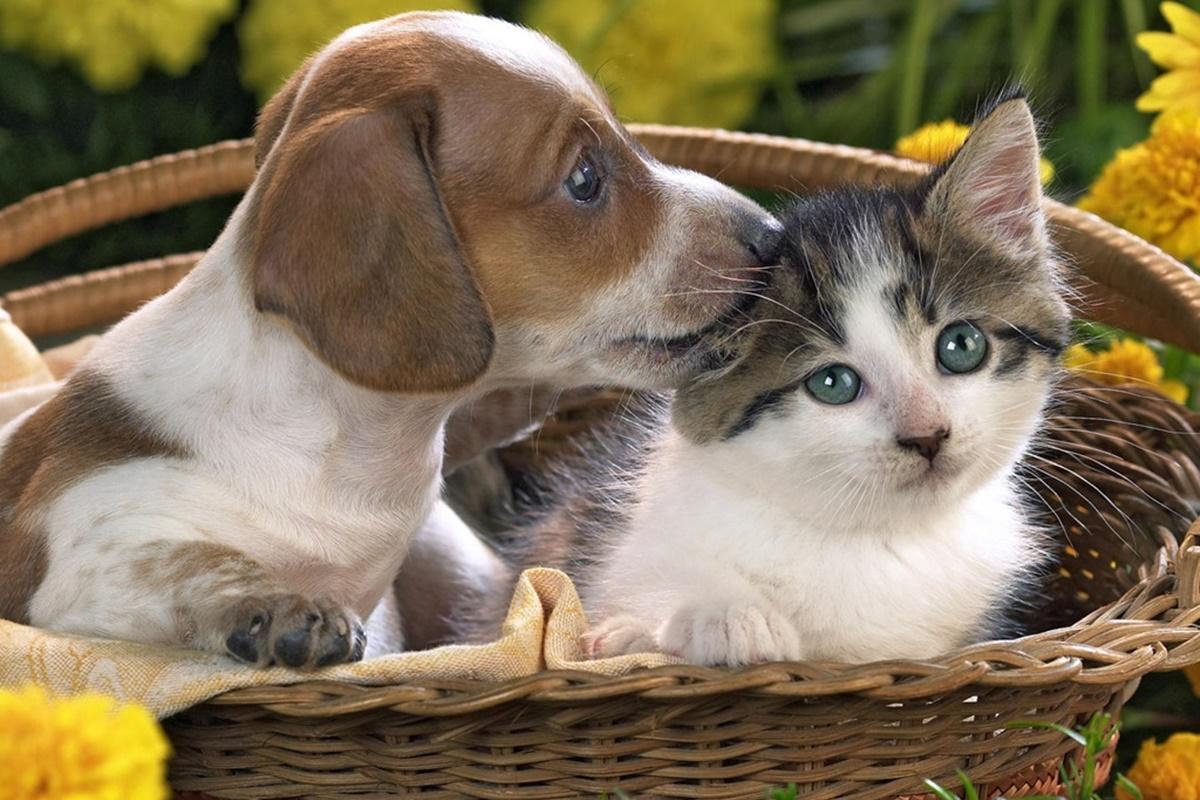 Evcil Hayvanların Bakımının Kolay Yolları Nelerdir?